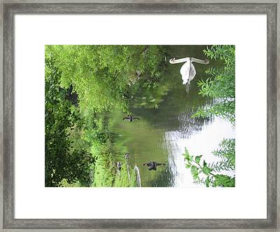Six Flags Great Adventure - Animal Park - 121273 Framed Print by DC Photographer