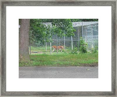 Six Flags Great Adventure - Animal Park - 121276 Framed Print by DC Photographer