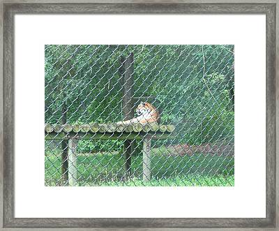 Six Flags Great Adventure - Animal Park - 121277 Framed Print by DC Photographer