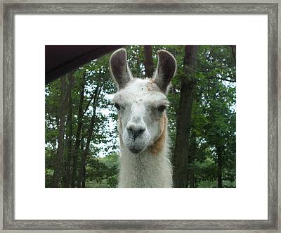 Six Flags Great Adventure - Animal Park - 121279 Framed Print by DC Photographer