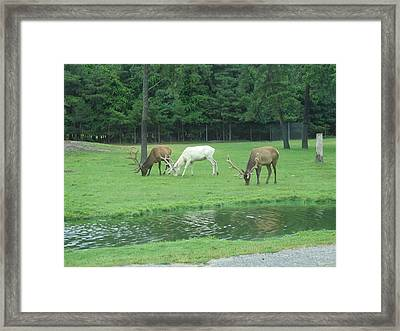 Six Flags Great Adventure - Animal Park - 12128 Framed Print by DC Photographer