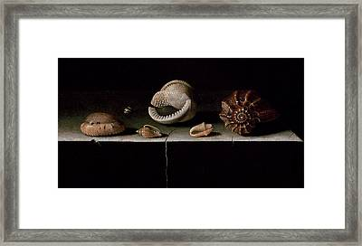 Six Shells On A Stone Shelf Framed Print by Adrian Coorte