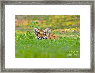 Sizing Up The Situation Framed Print by Ashley Vincent