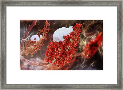 Sizzlin Sumac Framed Print by Donna Kennedy