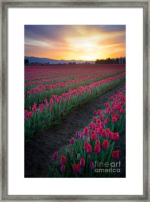 Skagit Valley Blazing Sunrise Framed Print by Inge Johnsson