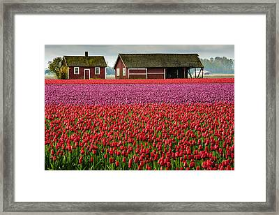 Skagit Valley Crops Framed Print by Dan Mihai