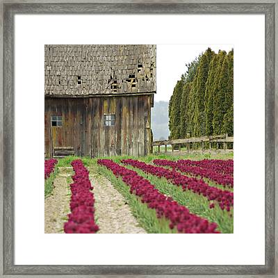 Skagit Valley Framed Print by Kjirsten Collier
