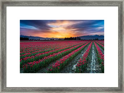 Skagit Valley Predawn Framed Print by Inge Johnsson