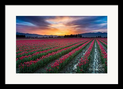 Agronomy Framed Prints