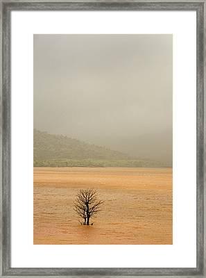 Skc 7441 Standing Dead Framed Print by Sunil Kapadia