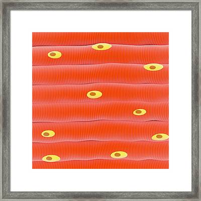 Skeletal Muscle Tissue Framed Print by Science Photo Library