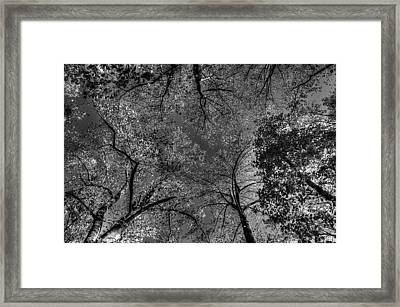 Skeletal Sky Framed Print