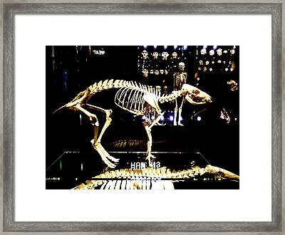 Skeleton 340 Framed Print