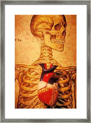 Skeleton And Heart Model Framed Print