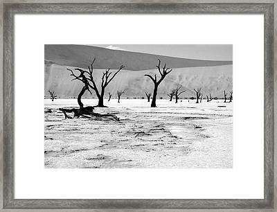 Skeleton Forest Framed Print by Aidan Moran