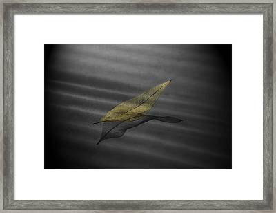Skeleton Leaf 4524 Framed Print