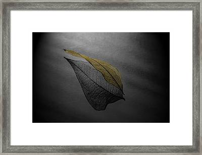 Skeleton Leaf 4716 Framed Print