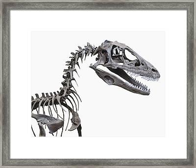 Skeleton Of A Deinonychus Framed Print