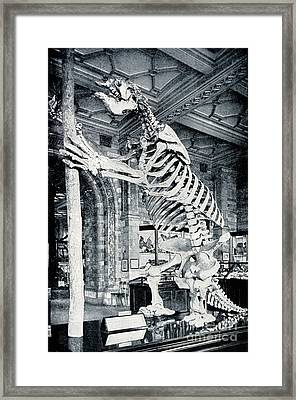 Skeleton Of South American Ground Sloth Framed Print