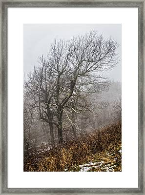 Skeletons In The Fog Framed Print