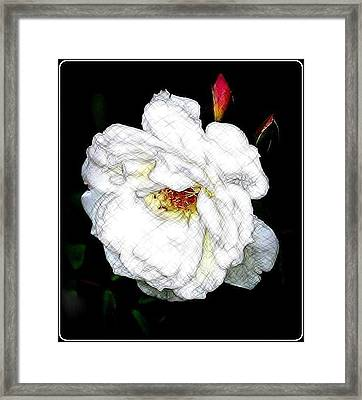 Sketch A Rose Framed Print