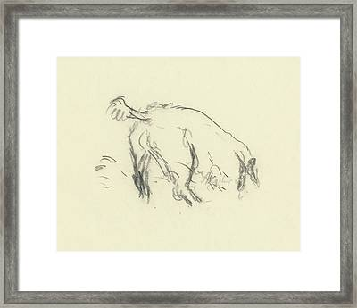 Sketch Of A Dog Digging A Hole Framed Print by Carl Oscar August Erickson