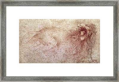 Sketch Of A Roaring Lion Framed Print by Leonardo Da Vinci