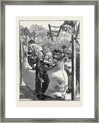 Sketches At A Northampton Wool Fair Filling The Bales Framed Print by English School