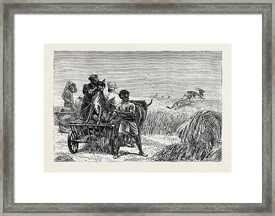 Sketches From India Framed Print
