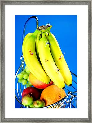Skiing On Banana Little People On Food Framed Print by Paul Ge