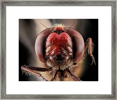 Skimmer Dragonfly Framed Print by Us Geological Survey