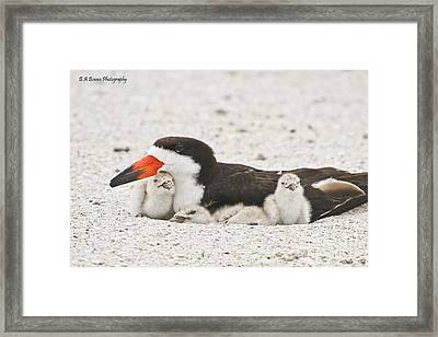 Skimmer Family Cuddle Framed Print