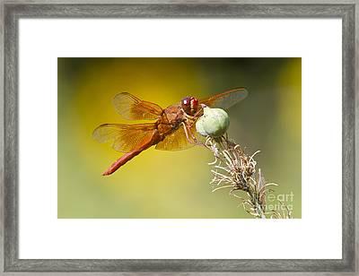 Skimmer Hanging Around Framed Print by Bryan Keil