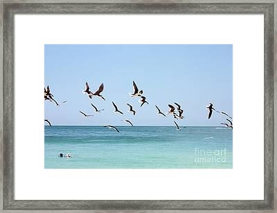 Skimmers And Swimmers Framed Print