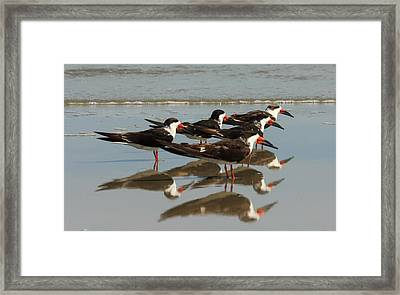 Skimmers With Reflection Framed Print