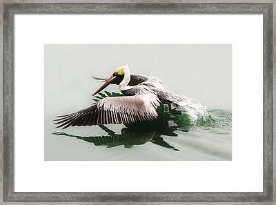 Skimming Across The Water Framed Print by Paulette Thomas
