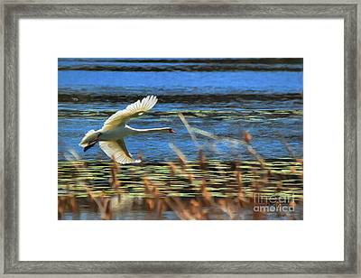 Skimming Framed Print by Lois Bryan