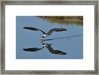 Skimming Framed Print