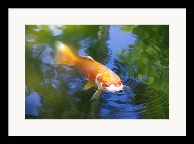 Great Place To Fish Photographs Framed Prints