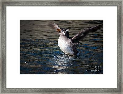 Skimming The Water Framed Print by Mandy Judson