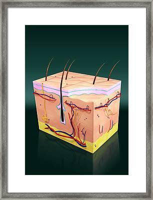 Skin Anatomy Framed Print by Harvinder Singh