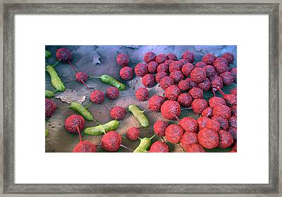 Skin Bacteria Communicating Framed Print by Thierry Berrod, Mona Lisa Production