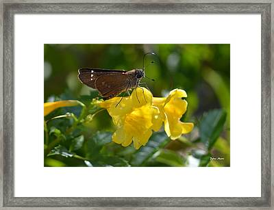Skipper Butterfly 2 Framed Print by Debra Martz