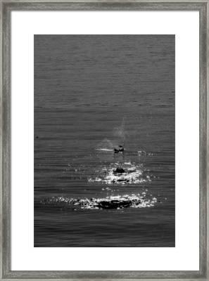 Skipping Stones Framed Print