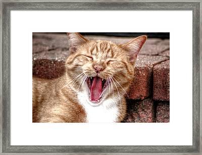 Skippy Laughing Framed Print
