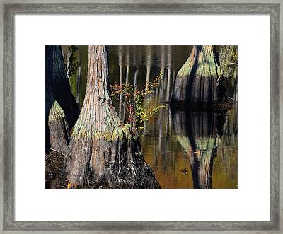 Skirt Decoration Framed Print by Laura Ragland