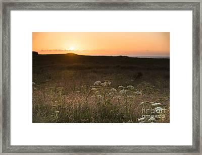 Skokhom Hogweed Sunset  Framed Print