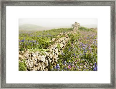 Skomer Wildflowers Framed Print by Anne Gilbert