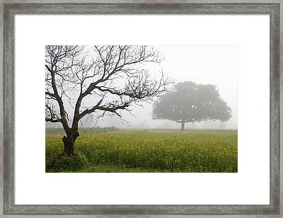 Framed Print featuring the photograph Skc 0058 Contrasty Trees by Sunil Kapadia