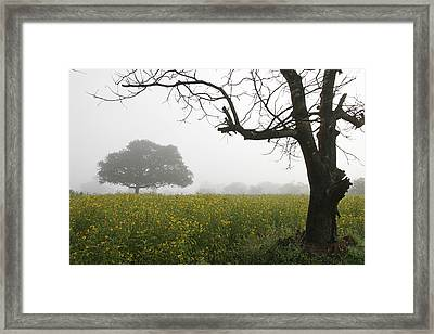 Framed Print featuring the photograph Skc 0060 Framed Tree by Sunil Kapadia